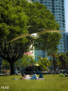 Seagull Photo Bomb in Vancouver