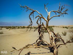 Mesquite Flat Sand Dunes 2