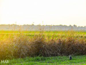 Hopson Plantation Sunset