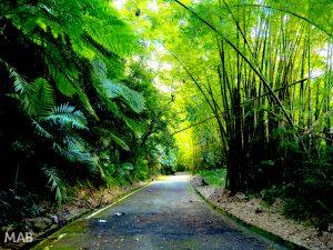 Closed Road Through El Yunque