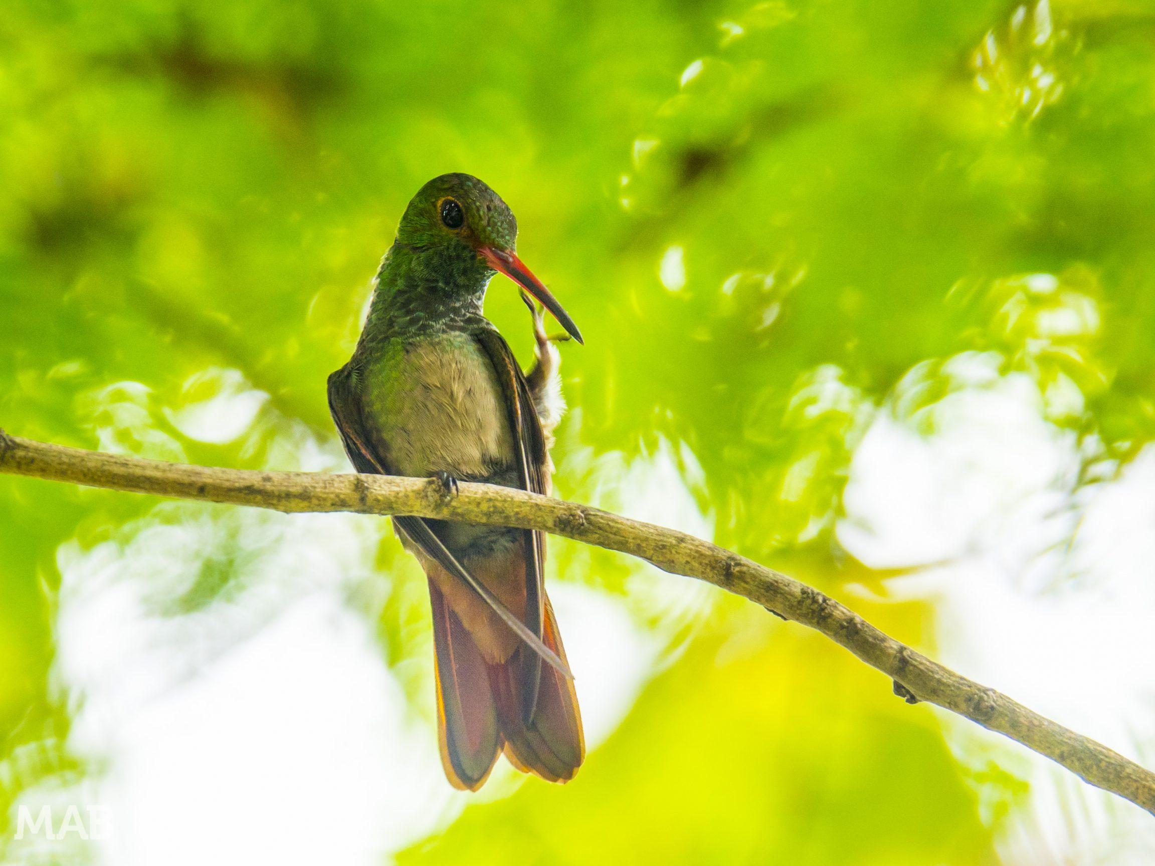 Hummingbird In The City