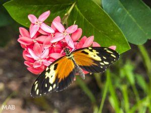 Lots of Butterflies 1