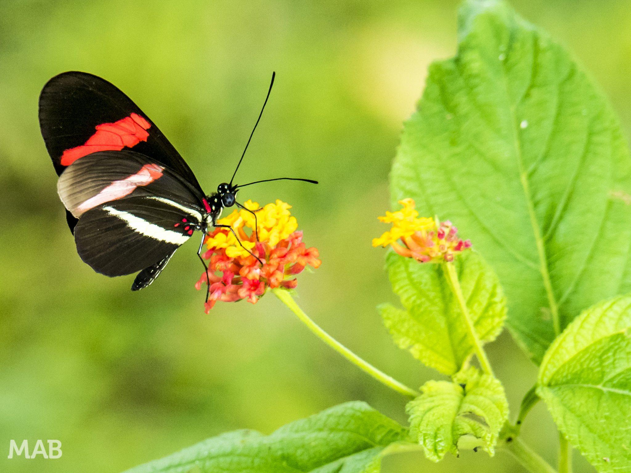 Lots of Butterflies 2