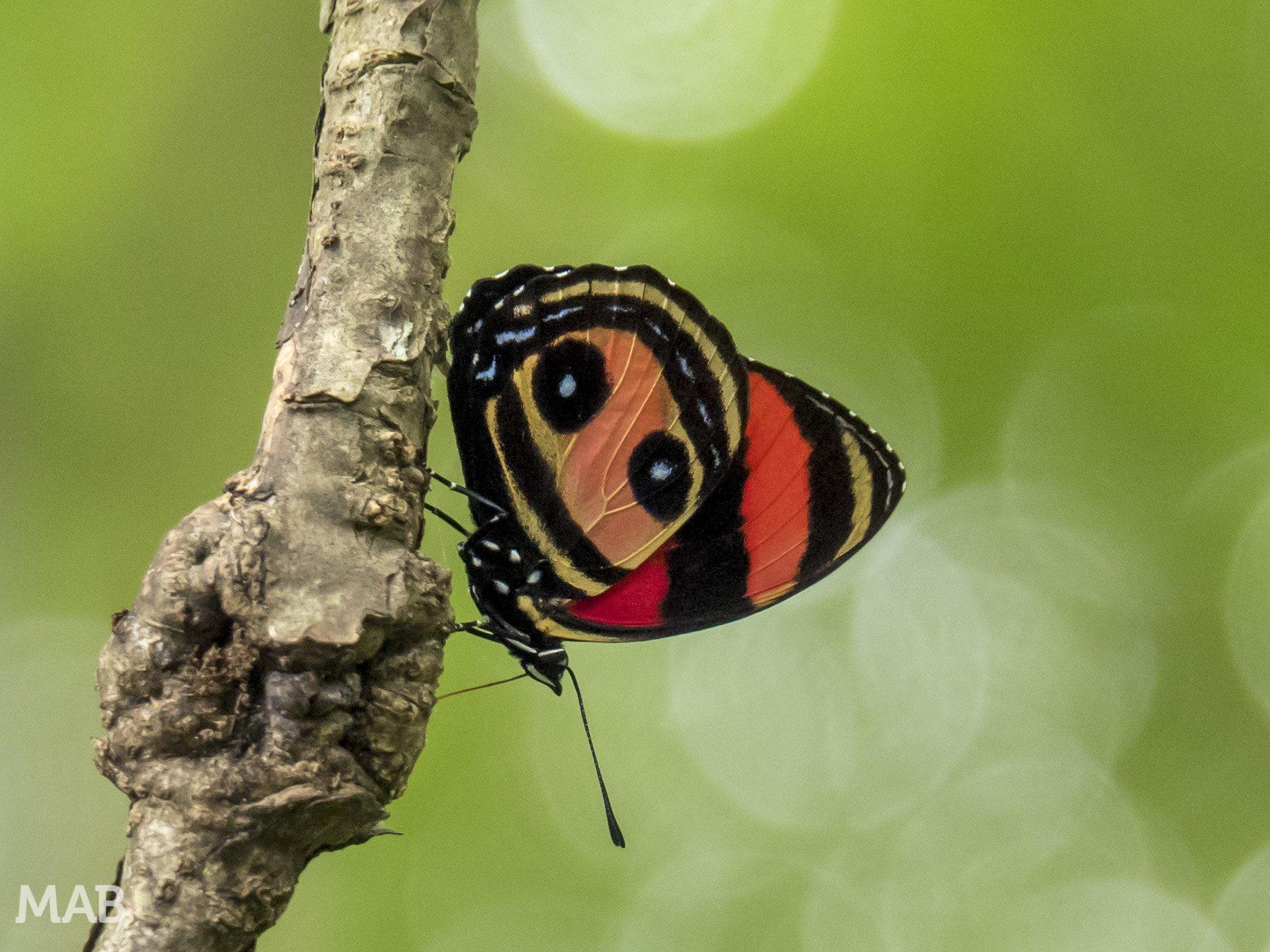 Lots of Butterflies 5