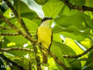 Name That Bird?