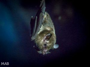 Little Bats 1
