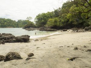 Iguana at the Beach