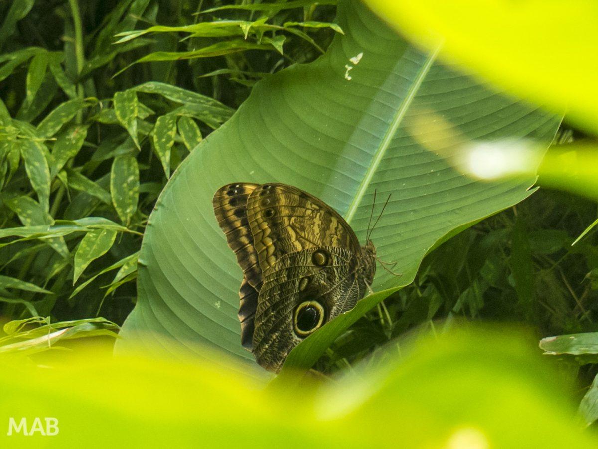 Lots of Butterflies 3