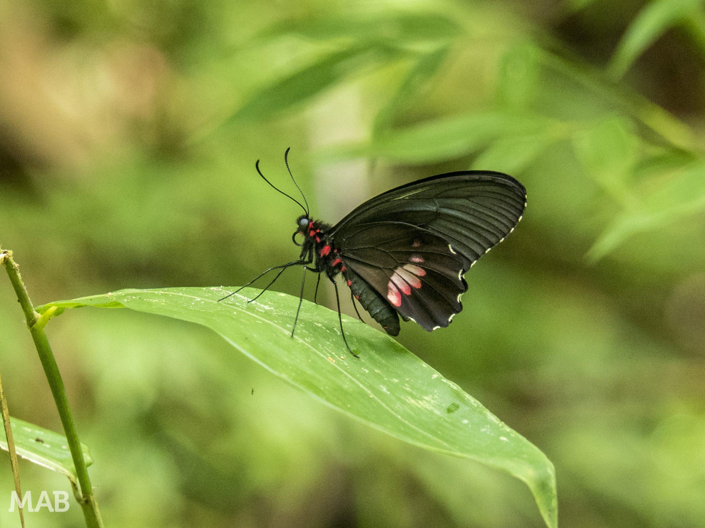 Lots of Butterflies 4