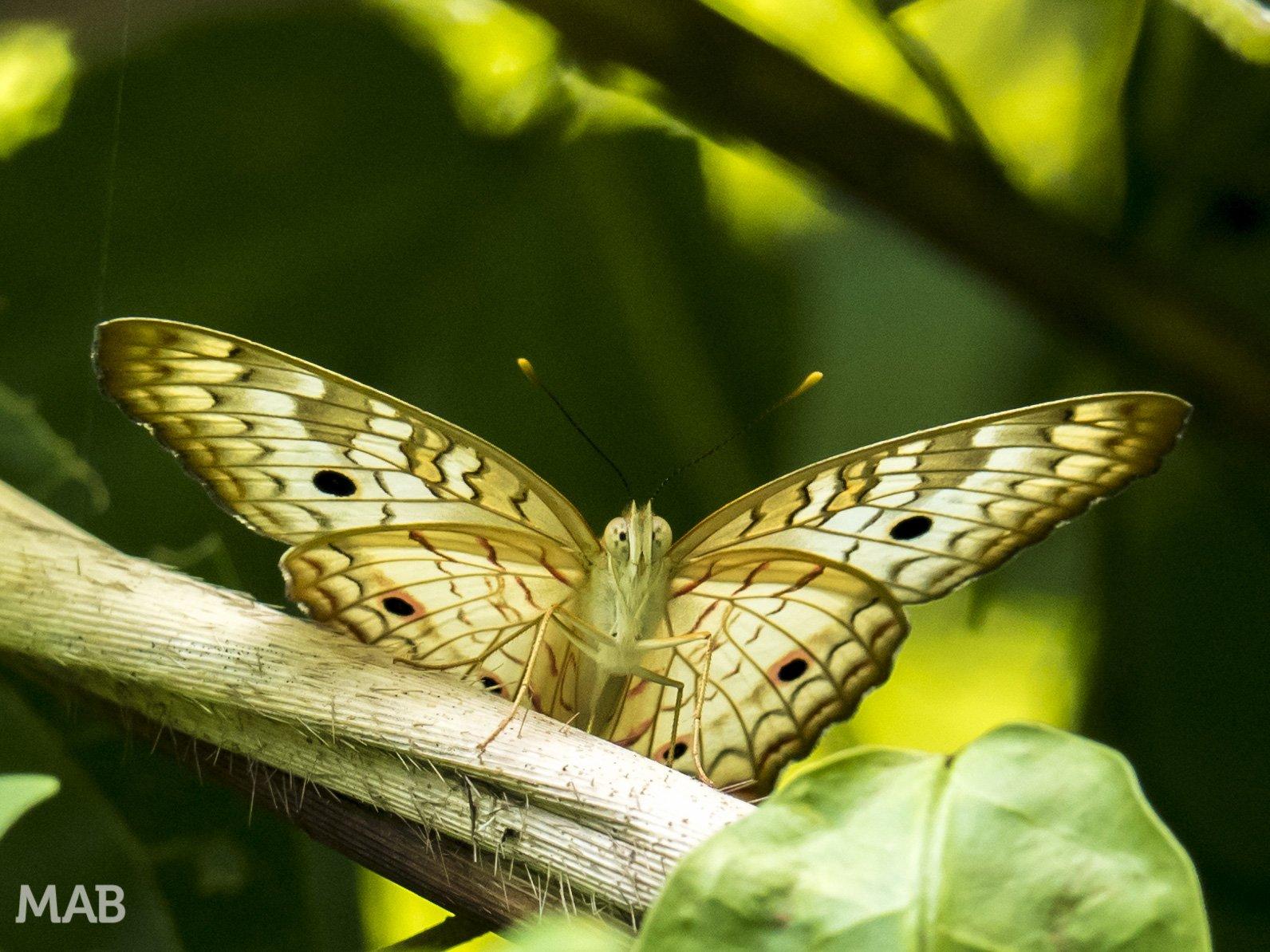 Lots of Butterflies 6